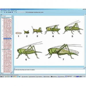 3B The World of Insects CD-ROM