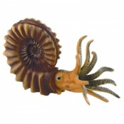 Model of an Ammonite