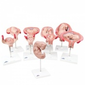 3B Deluxe Pregnancy Series, 9 Models