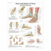 Foot and Ankle Anatomy Chart