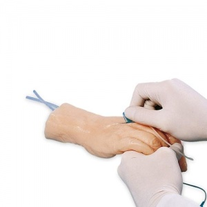 Venipuncture Training Hand