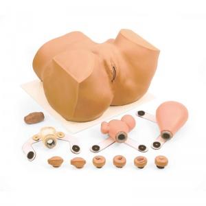 EVA Gynaecological Trainer