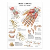 Hand and Wrist Anatomy Chart